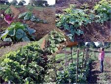 Hortaliças e Verduras