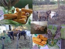 Produção de alimentos para os animais