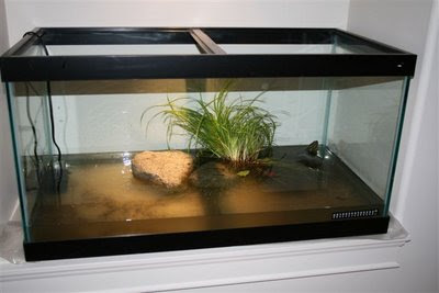 Turtle tank