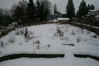Back yard in snow
