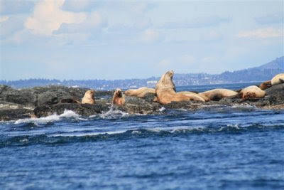 Sea lion hangout