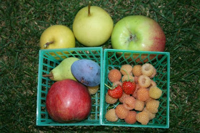 Samples of fruit