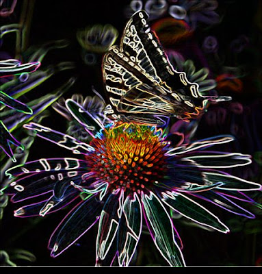 Funky Photoshopped swallowtail butterfly image