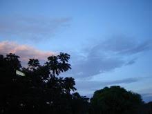 árvores recortando o céu.