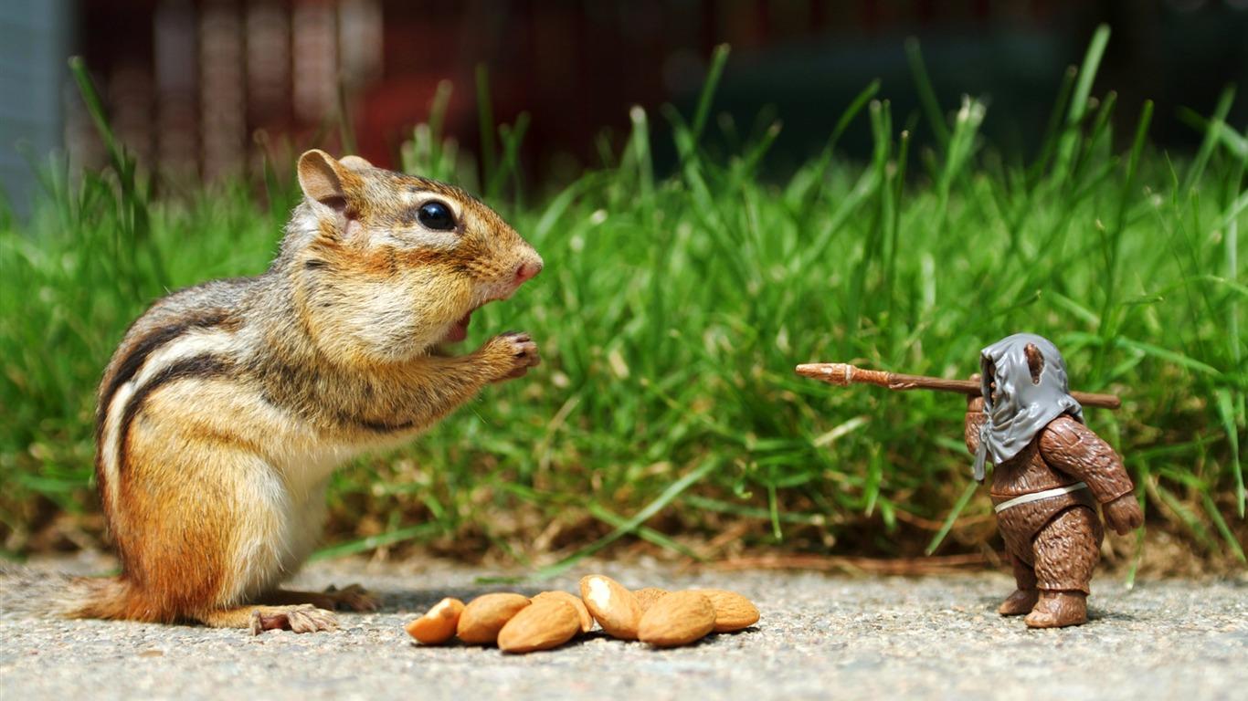 Desktop Wallpapers of squirrel eating nuts animals wallpapers