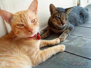 Cats (SE g705)