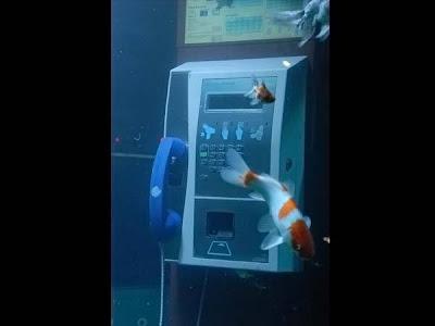 Aquarium Telephone Booth In France Aquarium Telephone