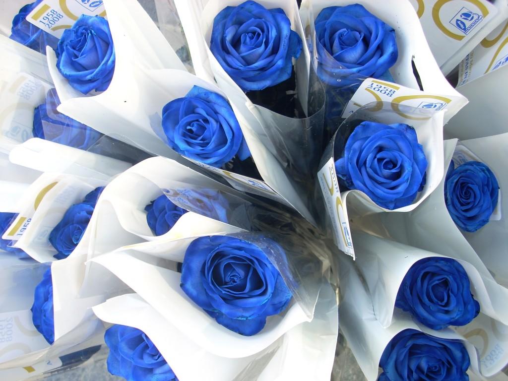 sabrina audrey, martin landau, ali heroes, brooke shields laguna azul,