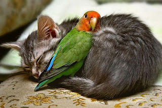 akibat Cinta Terlarang^^ Zofup1ria2unlikely_animal_friendships_02