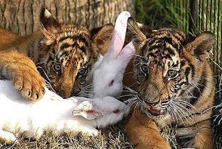 akibat Cinta Terlarang^^ A6tpcvnnewlittle_animals_4