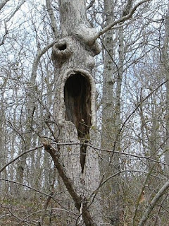 STRANGE TREE UNIQUE, IN THE FORM OF ANIMAL AND HUMAN FACE