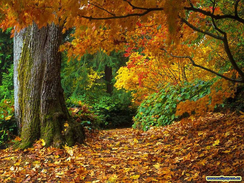 http://4.bp.blogspot.com/_fpS0993WVEA/THd2WV6d3WI/AAAAAAAABUk/e_NnsdrCJYg/s1600/fall-of-autumn-leaves-wallpaper.jpg
