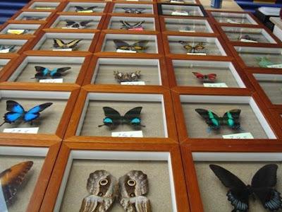 Foto collezione farfalle al Balon
