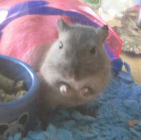 Zoeo the Great  (one of our 1st Gerbils)