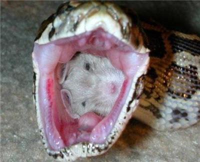* Cobra na hora do almoço
