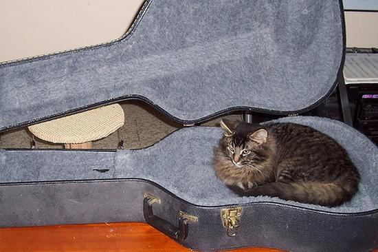 Funny Cats with Guitars