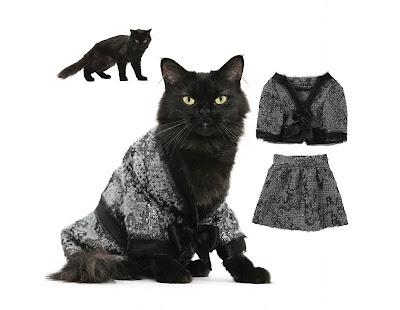 sukague.com: Kostum-kostum Kucing Yang Lucu