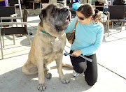 I met a 195 pound English Bull Mastiff named Max outside of Starbucks.