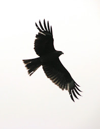 Eagle over Hasedera Temple