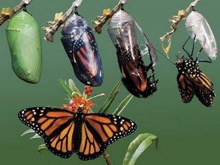 Telur Kupu-kupu dan Kepompong