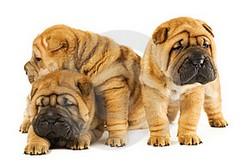 Fotos de cachorros Bonitos