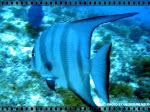MAR ABERTO - blog de informações e fotos subaquáticas