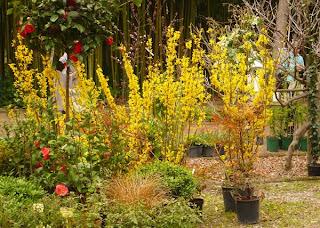 Primavera au jardin des plantes