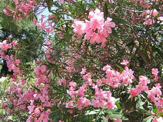 Jardin fleurie : le jardin des plantes