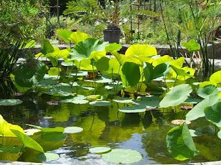 Montpellier et son jardin des plantes