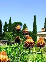 Montpellier : jardin botanique