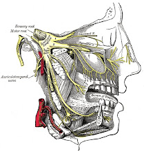 Detailed View of Trigeminal Nerve Shown In Yellow