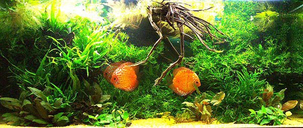 Aquascape Aquarium Hobby