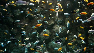What types of fish can be kept in wall fish tank exotic for Ornamental fish tank