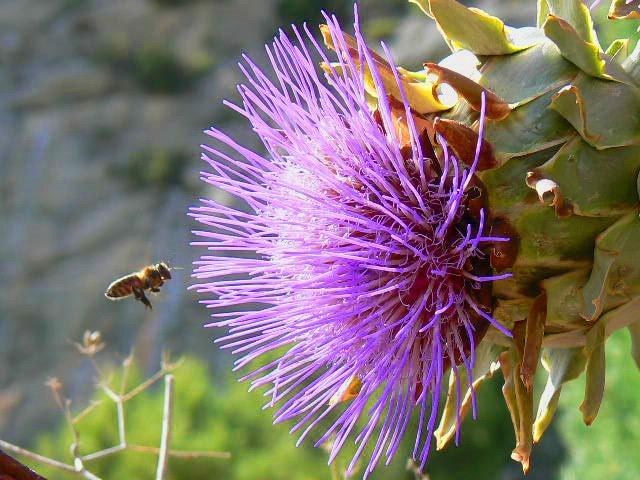 La flor y la abeja