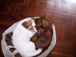 Onze Sara en Jiba onze kleinhond