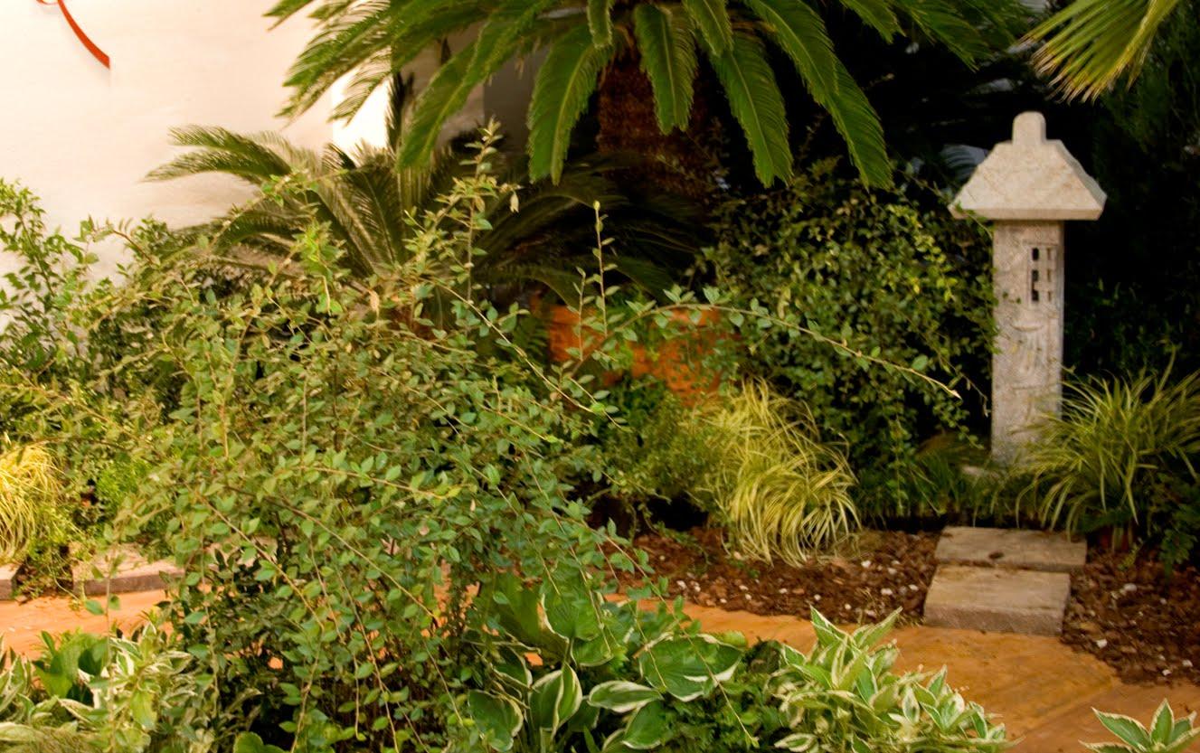 Giardino d 39 oriente vivai ghellere - Giardino d oriente roma ...