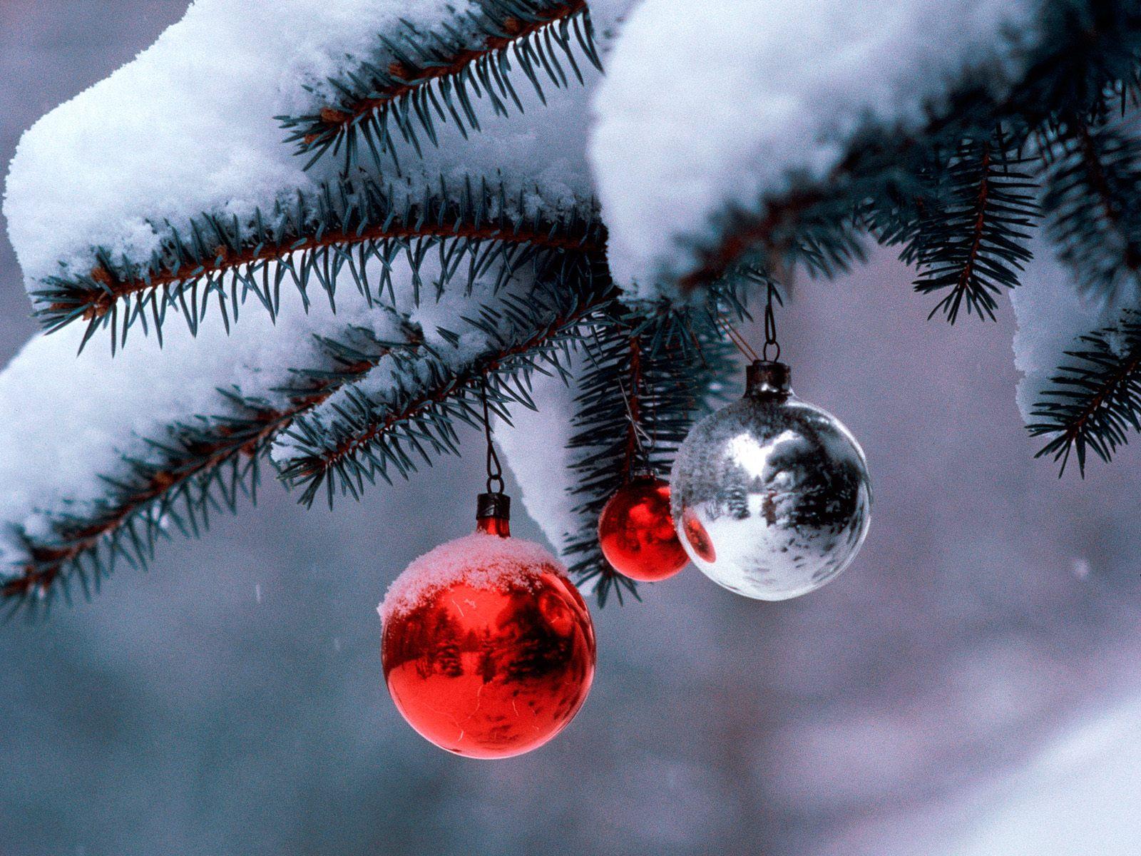 http://4.bp.blogspot.com/_g0tv7q-b5Cw/TRSbZKjwK0I/AAAAAAAAAQ8/ZXVxrwUN1mE/s1600/Christmas+%252820%2529.jpg