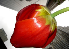 The Big Tulip