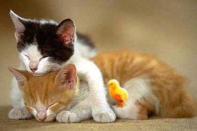 Cute Animal Couples Photos