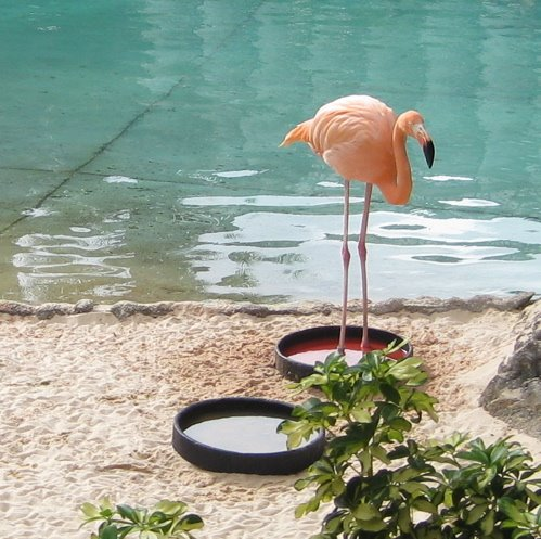 [flamingos.jpg]