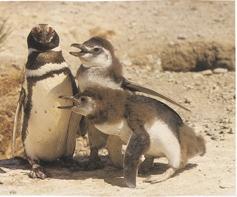 FAMILIA DE PINGUINOS - TODOS DEBEMOS SER ENTRE NOSOTROS LA FAMILIA DE LA VIDA -