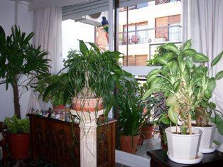 PLANTAS SERES VIVOS - DAN OXÍGENO