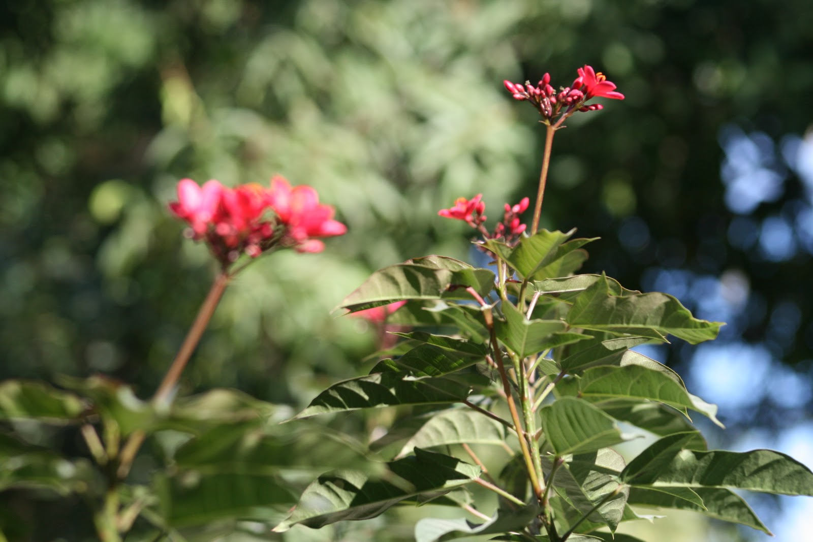 Vivre en ha ti au quotidien et puis voici quelques for Bouquet de fleurs quebec