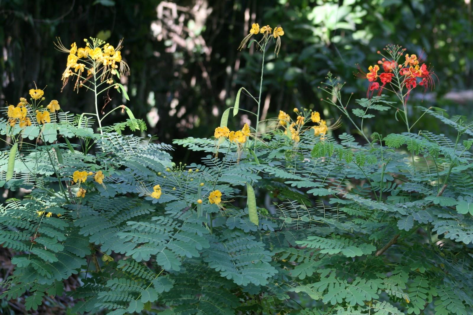 Vivre en ha ti au quotidien et puis voici quelques for Fleurs thes au jardin