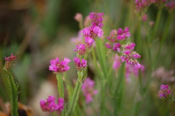 ~Sparrows Garden~