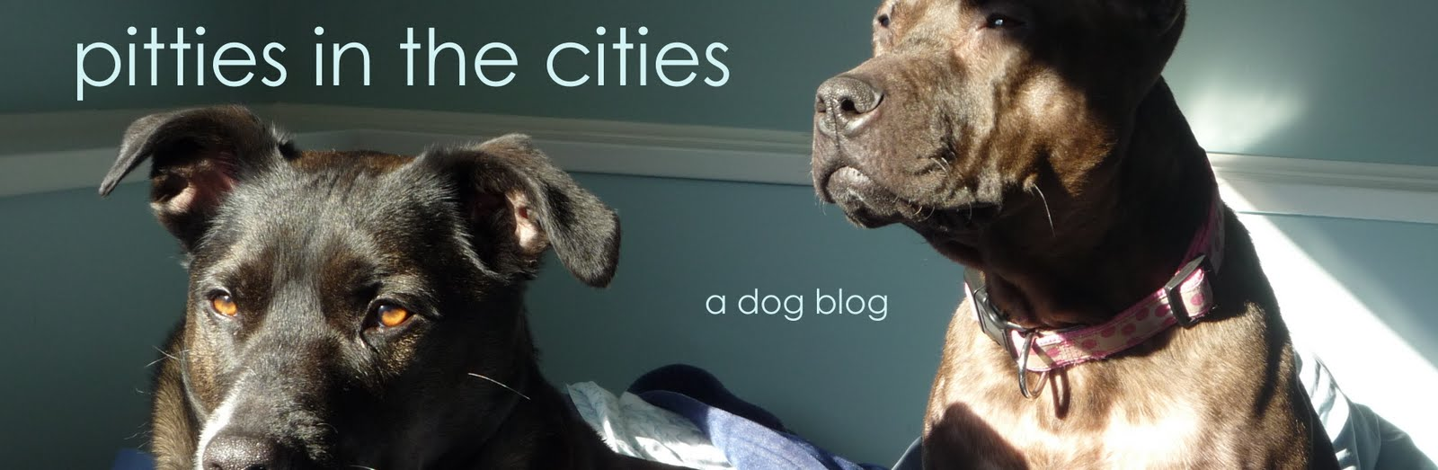 Pitties in the Cities