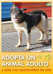 Adoptá una animal adulto