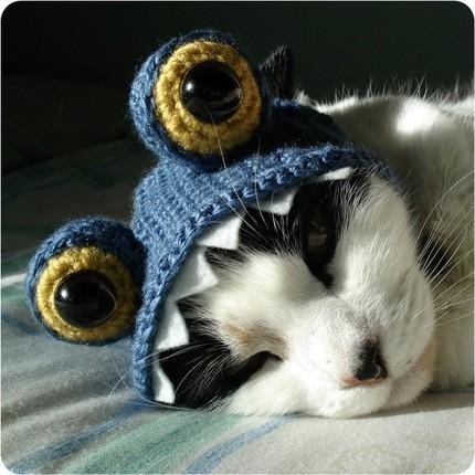 Mola coser: Gorritos para perros y gatos