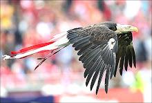 O voo da águia
