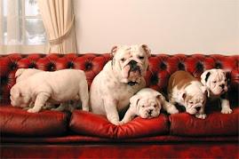 De l'Enclos Bulldogs